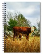 Beautiful Bovine 1 Spiral Notebook