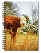 Beautiful Bovine 2 Spiral Notebook