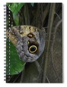 Beautiful Brown Morpho Butterfly In A Lush Garden  Spiral Notebook