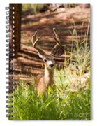 Beautiful Buck Deer In The Pike National Forest Spiral Notebook