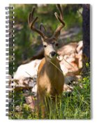Beautiful Buck In The Pike National Forest Spiral Notebook