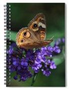 Beautiful Buckeye Spiral Notebook
