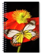 Beautiful Butterfly On Poppy Spiral Notebook