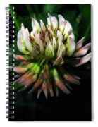 Beautiful Clover Blossom Spiral Notebook
