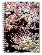 Beautiful Coral Reef  1 Spiral Notebook
