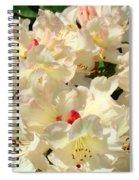 Beautiful Creamy White Pink Rhodies Floral Garden Baslee Troutman Spiral Notebook