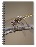 Beautiful Dragonfly Spiral Notebook