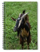 Beautiful Face Of A Billy Goat With Tan And Black Silky Fur Spiral Notebook