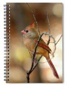 Beautiful Female Cardinal Spiral Notebook