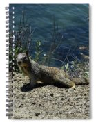 Beautiful Ground Squirrel Standing At The Edge Of The Coast Spiral Notebook