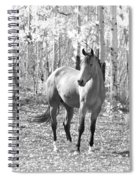 Beautiful Horse In Black And White Spiral Notebook
