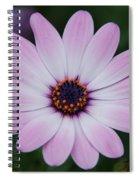 Beautiful In Pink Today Spiral Notebook