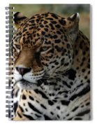 Beautiful Jaguar Portrait Spiral Notebook