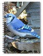 Beautiful Jay Spiral Notebook
