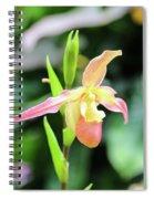 Beautiful Lady Slipper Spiral Notebook
