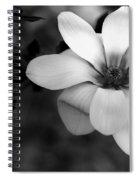 Beautiful Magnolia Spiral Notebook