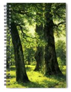 Beautiful Oak Trees Reach To The Skies Spiral Notebook