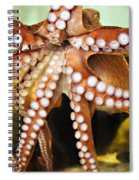 Beautiful Octopus Spiral Notebook