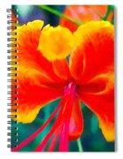 Beautiful Peacock Flower 3 Spiral Notebook