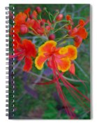 Beautiful Peacock Flower 5 Spiral Notebook