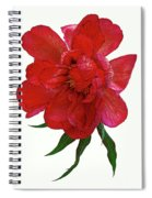 Beautiful Peony Flower. Spiral Notebook
