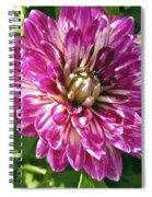 Beautiful Pink And White Dahlia Spiral Notebook