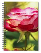Beautiful Pink Rose Blooming In Garden Spiral Notebook