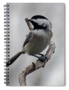 Beautiful Pose - Black-capped Chickadee Spiral Notebook