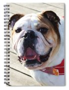 Beautiful Pug. Spiral Notebook