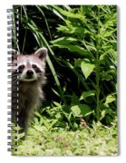Beautiful Racoon Spiral Notebook