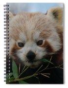 Beautiful Red Panda Spiral Notebook