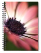 Beautiful Rich African Daisy Zion Red Flower Spiral Notebook