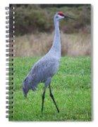 Beautiful Sandhill Crane Spiral Notebook