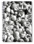 Beautiful Seashells Black And White Spiral Notebook