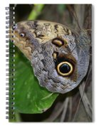 Beautiful Shot Of A Brown Morpho Butterfly Resting  Spiral Notebook