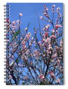 Beautiful Spring. Blooming Tree 1 Spiral Notebook