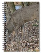 Beautiful Stag Spiral Notebook