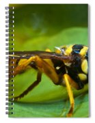 Beautiful Syrphid Spiral Notebook