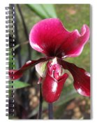 Beautiful Temptation 2 Spiral Notebook