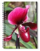 Beautiful Temptation Spiral Notebook
