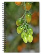 Beautiful Tomatoes Spiral Notebook