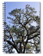 Beautiful Tree Blue Sky Sunshine Spiral Notebook