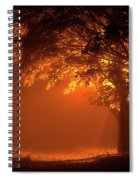 Beautiful Trees At Night With Orange Light Spiral Notebook