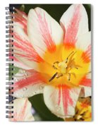 Beautiful Tulip With A Yellow Center And Pink Striped Petals Spiral Notebook