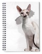 Beautiful Two-color Eyes Cornish Rex Spiral Notebook