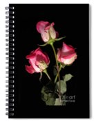 Beautiful Two Tone Roses 3 Spiral Notebook