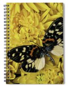 Beautiful Wings On Yellow Mums Spiral Notebook