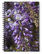 Beautiful Wisteria A Spring Delight Spiral Notebook
