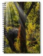 Beautiful Woodlands Spiral Notebook