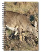 Beautiful Young Deer Spiral Notebook